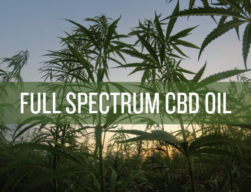 Full Spectrum CBD Oil. Why is it so important?